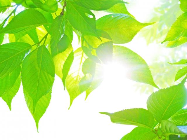 太陽の光と葉っぱ