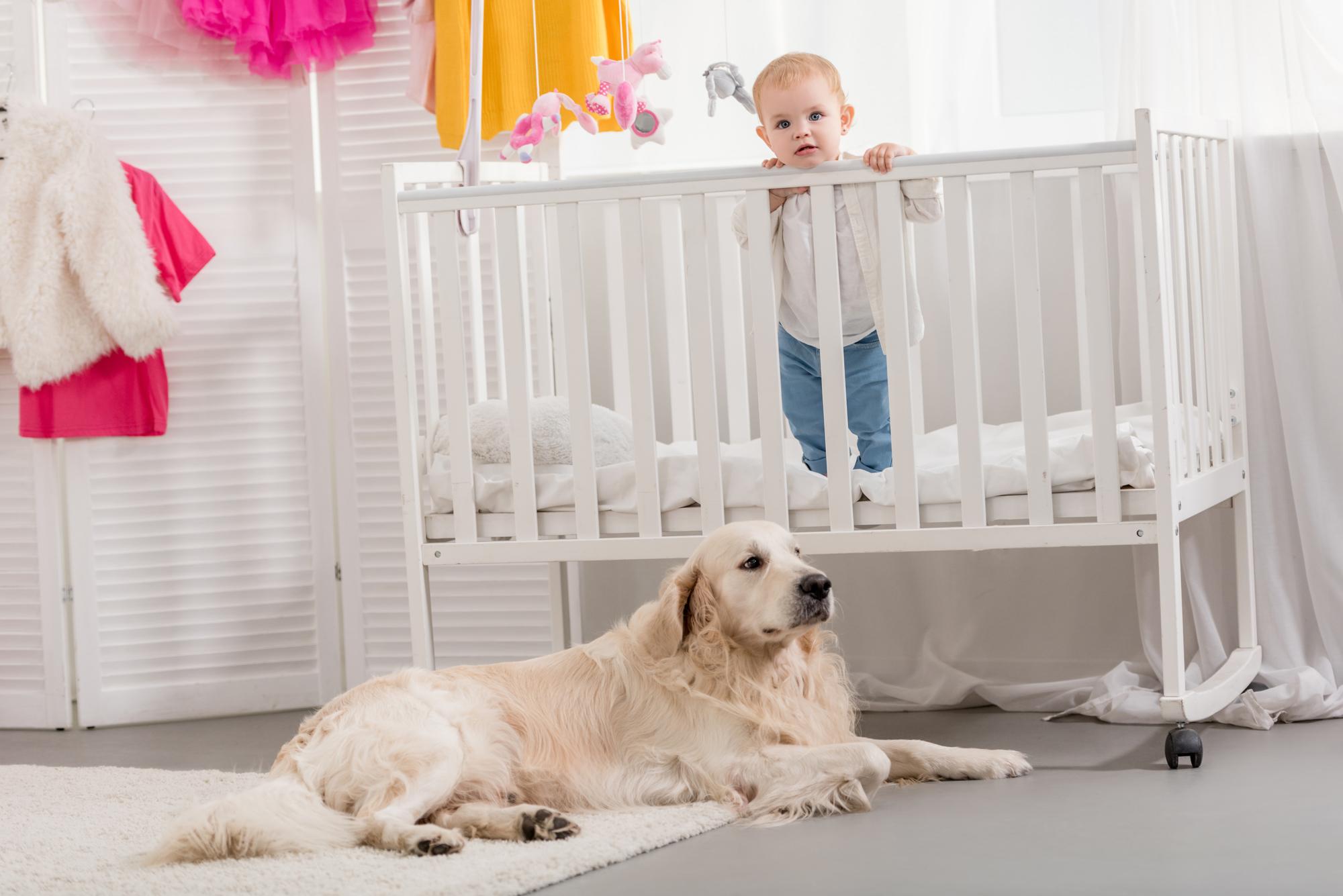 犬とベビーベッド