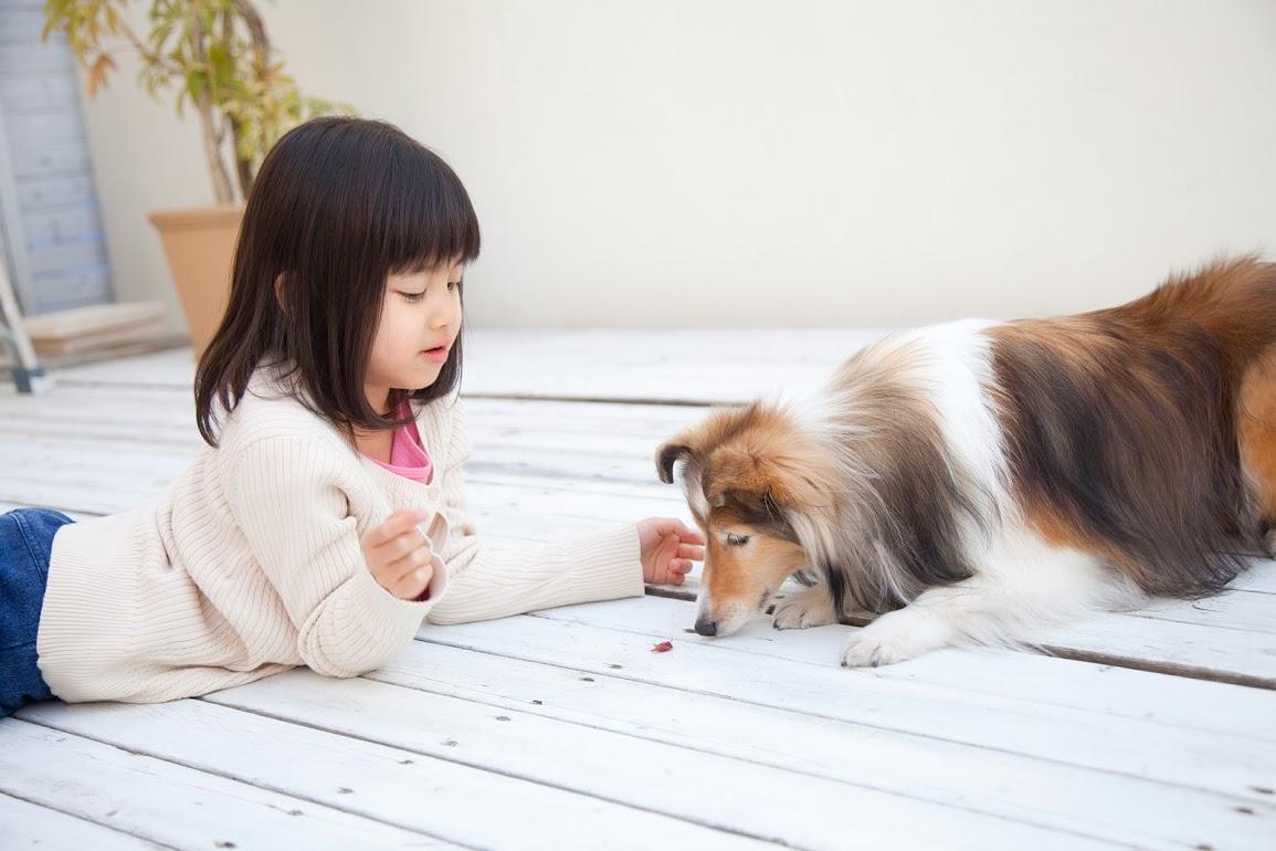 お姉ちゃんと犬